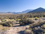 Desert near Mono Lake [D]