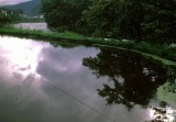 river and flooded field.jpg
