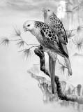 parakeets124bw.jpg