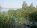 Au bord d'un des lacs de la Forêt d'Orient