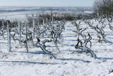 La région des Coteaux du Layon sous la neige en mars 2006 (Anjou)