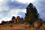 Pine & Rocks