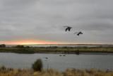 Hobson's Bay Wetlands