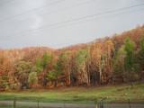 Bushfires 2006/7