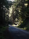 From the Dry Creek Road,Sonoma II