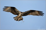 Osprey 27
