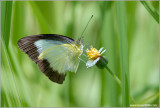 Butterfly at Subic Rain Forest 39