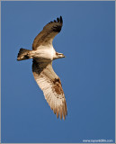 Osprey 45