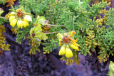 Floreana flora