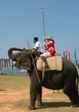 Ceylon Elephant Polo Association Tournament