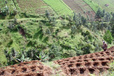 Vegetable plots, Gunung Lawu