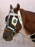 Carriage pony, Havana Vieja