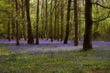 2009 staffhurst woods.jpg