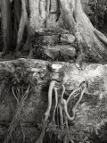 Roots, Xcaret, Mexico
