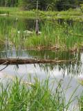 Pond, Apsley, Ontario