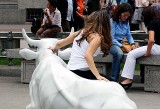 Taming the Bull