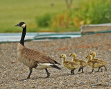 Mom and kids out for a stroll.....