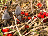Berries and fungus