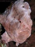 Stewie's Frog