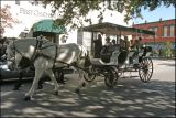 Savannah Buggy Tour.jpg
