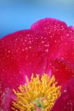 flower120.jpg