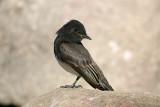 Kern River Bird