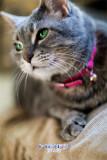HDP3 Cat