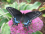 Growing Butterflies and other critters
