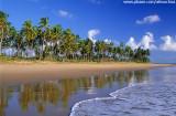 Coqueiral na península de Maraú, Bahia