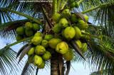 Cacho abarrotado de coco