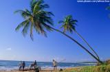 Chegada de jangadas na Praia do Cassange, Península do Maraú, Bahia