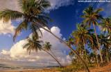 Coqueiral na Península de Maraú