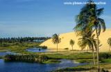 Coqueiros e dunas na praia do cumbuco.jpg