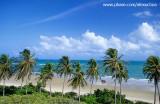 coqueiral na praia de munda£, Trairi, CE2.jpg