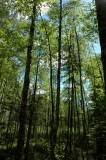 Forest National Park Leivonmaeen