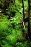 Forest Creek - Laajavouri, Jyvaskyla, Finland