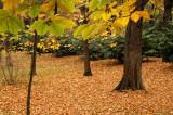 El otoño pasa en el Campo del Moro