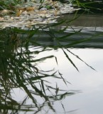 River-edge Grasses, Reflected