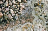 Pebbles and Lichens
