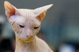 Sphinx Cat, DigicamPlus