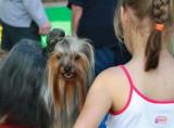 Dogs Exhibition in Maayan Harod