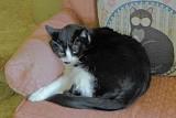 Kathys Cat.jpg