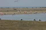 Gulls, flamingos and fur seals at Pelican Point, Walvis Bay