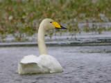 Birds of Loch Lomond