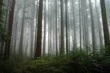 UBC trail