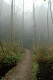 UBC trails