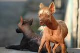 Street Dogs in Trinidad