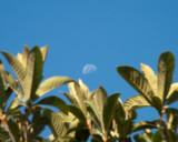 Aug 18 03 framed moon-1679.jpg