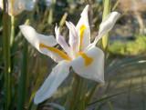 Jan 2 03 Flower 0253.jpg