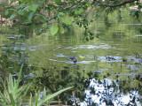 May 17 07 Local Lake Nutria-Dead canary.JPG